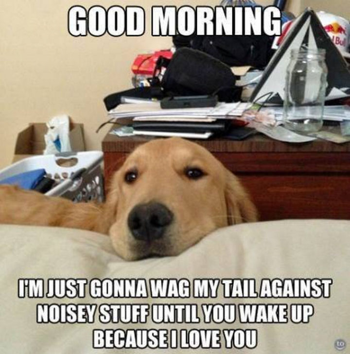 30 Things Only Dog Owners Will Understand - They'll be the cutest alarm clock ever.