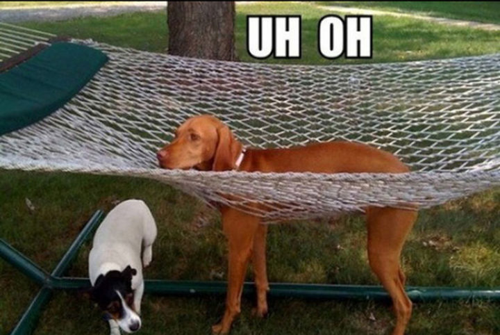 30 Things Only Dog Owners Will Understand - They'll get themselves caught in the most hilarious places.