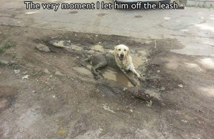30 Things Only Dog Owners Will Understand - They don't mind getting dirty if it means having fun.