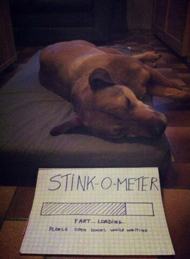 30 Things Only Dog Owners Will Understand - Did I already mention they fart?