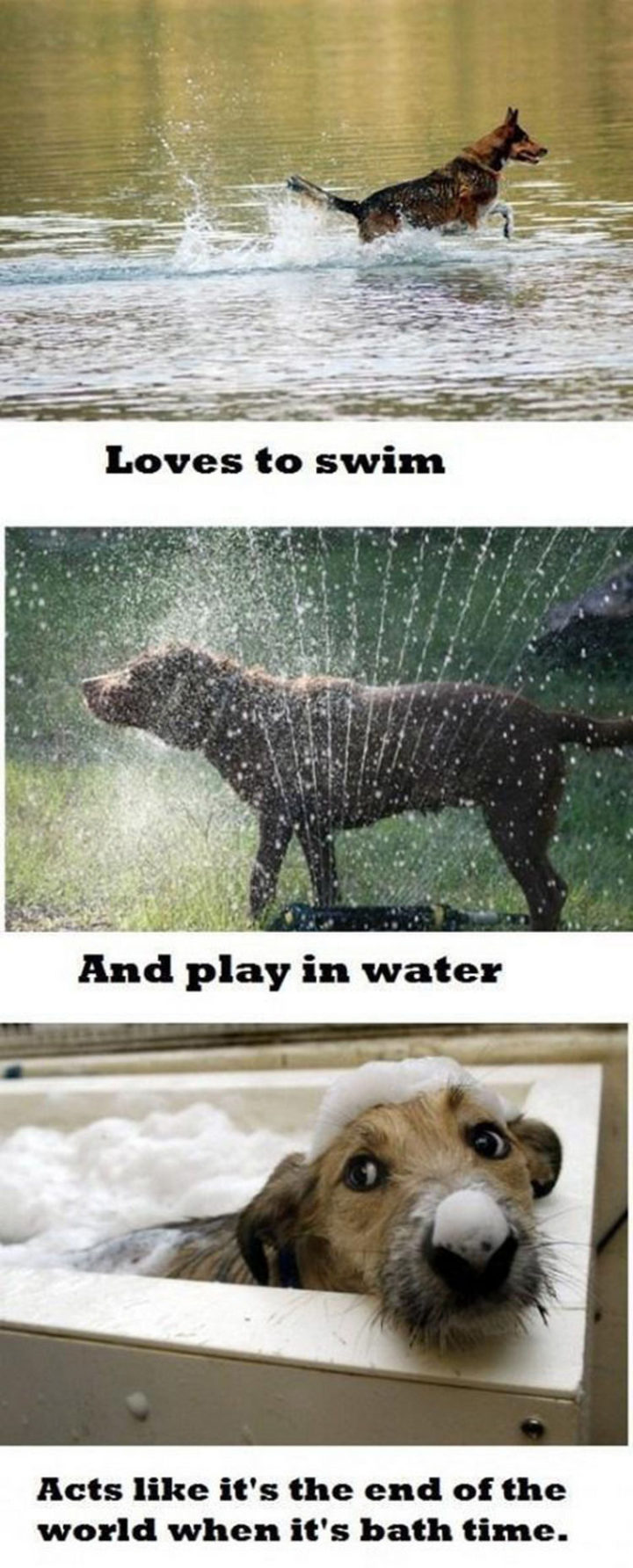 30 Things Only Dog Owners Will Understand - Maybe it's the bubbles?