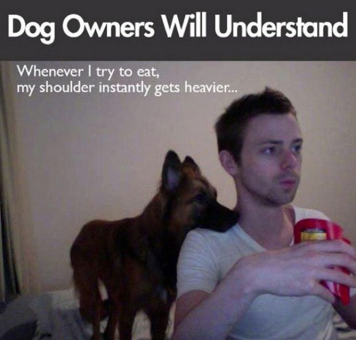 30 Things Only Dog Owners Will Understand - They're just hoping some of the food hits the ground.