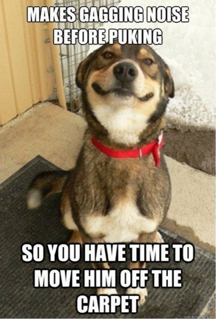 30 Things Only Dog Owners Will Understand - Well, that's considerate of them...