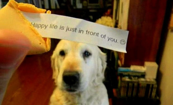 30 Things Only Dog Owners Will Understand - They truly will make your life happier.