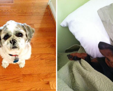 30 Hilarious Things Only Dog Owners Will Understand.