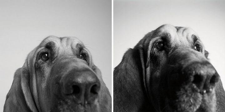Amanda Jones – Dog Years - Cooper: 3 years and 10 years.