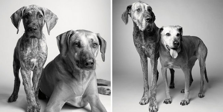 Amanda Jones – Dog Years - Kaydenand Brodie: 11 months and 5 years;7 years and 12 years.