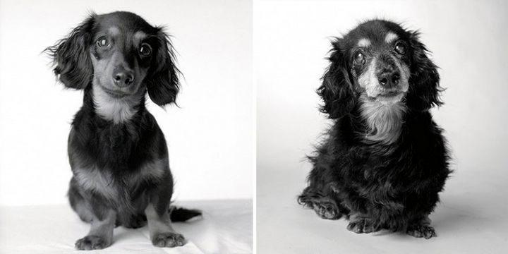 Amanda Jones – Dog Years - Lily: 8 months and 15 years.