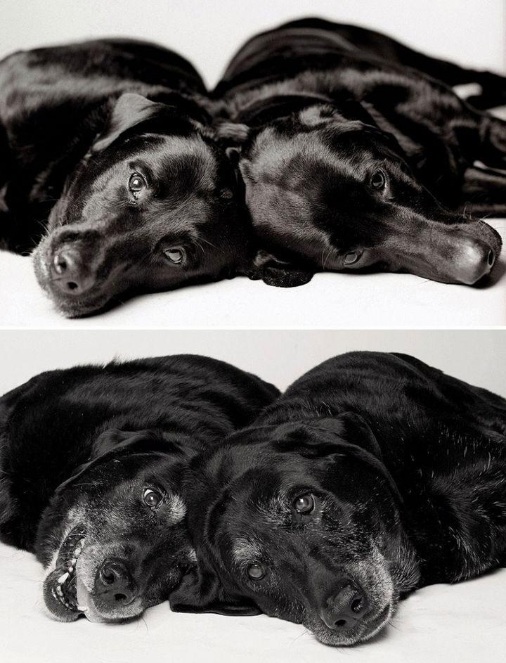 Amanda Jones – Dog Years - Maddieand Ellie — 7 years and 6 years;14 years and 13 years.