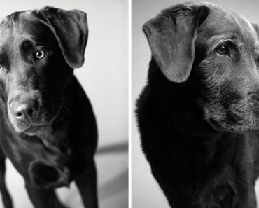 Photographer Takes Photos of Dogs Across their Years.