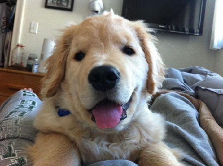 Look at his adorable face!