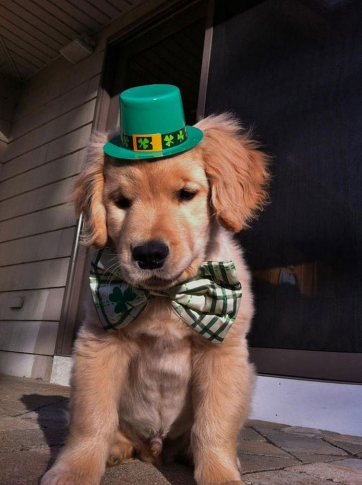 He loves it when he gets to dress up to celebrate holidays like St. Patrick's Day.