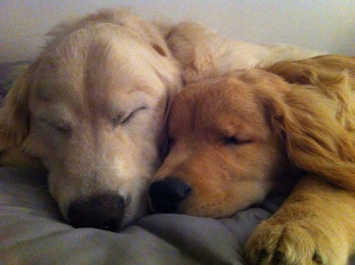 When playtime is over, Ray Charles loves nothing more than taking a nap with his best bud.