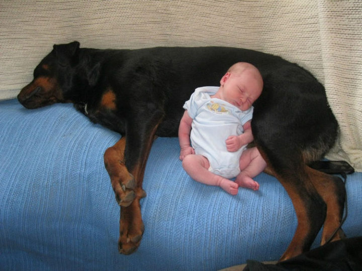 14 Dogs and Babies - Dogs and babies are the sweetest things ever.