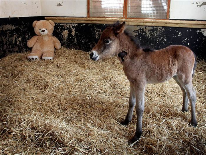 Breeze didn't have a mother but he found comfort with an adorable replacement.