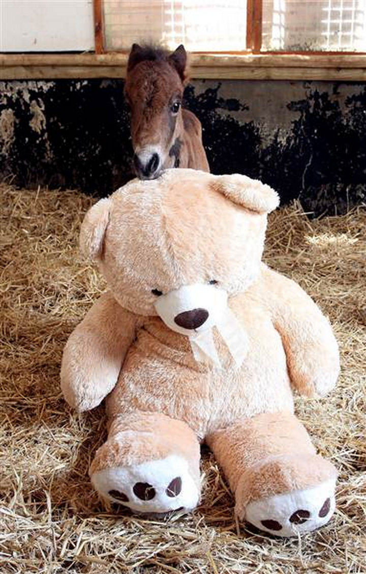 The two have been inseparable and the young foal's health has improved dramatically since the rescue.