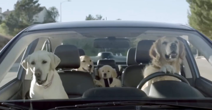 "Subaru Dog Commercials Features ""The Barkleys"" Dog Family."