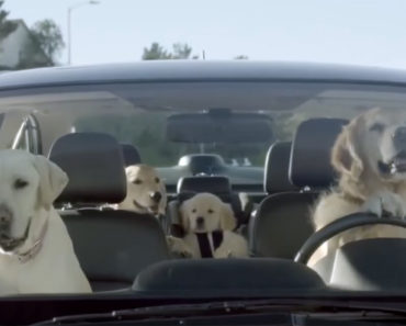 Here Is How Hilarious It Would Be If Dogs Could Drive. I Couldn't Stop Laughing!