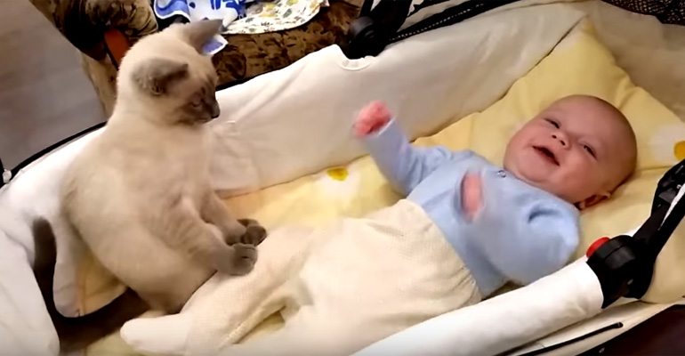 Cat Adorably Tries to Keep the Baby Calm by Holding on to Him.