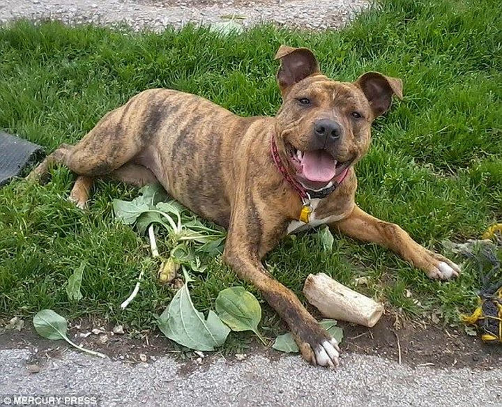 Freya is a Staffordshire bull terrier cross and she is as cute as a button. Look at that smile!