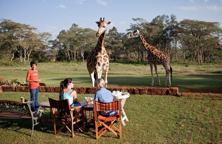 While at Giraffe Manor, the AFEW Giraffe Centre provides an opportunity to learn about the endangered Rothschild Giraffe.