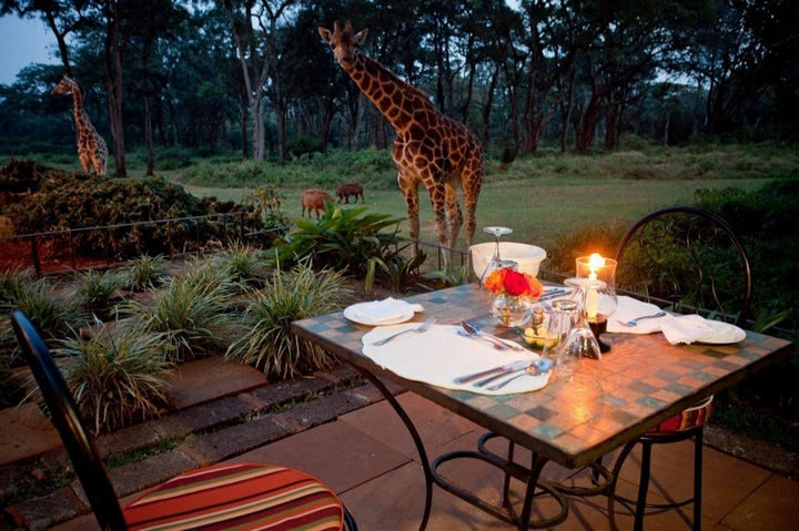 Dining outside is a special treat at Giraffe Manor with giraffes looking on.