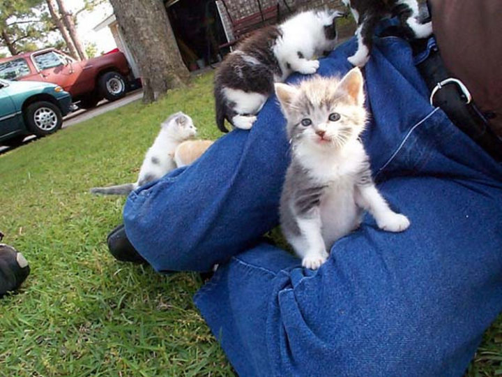 This grandpa was adorably attacked by 8 cute kittens.