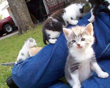 Herd of Kittens Adorably Attacks a Poor Defenseless Grandpa.