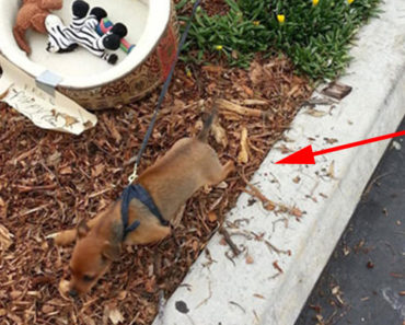A Man Finds an Abandoned Puppy Tied to a Tree. His Quick Action Saved Her Life.