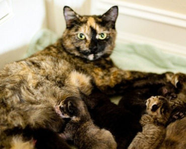 Rescue Cat Adopts Orphaned Kittens As Her Own.