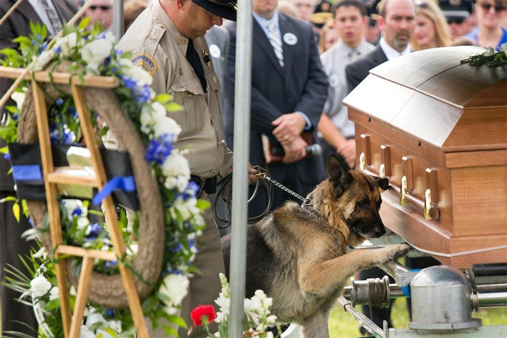 This Police Dog Had to Say Goodbye to His Fallen Partner.