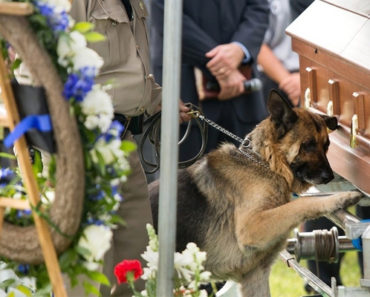 This Police Dog Had to Say Goodbye to His Fallen Partner
