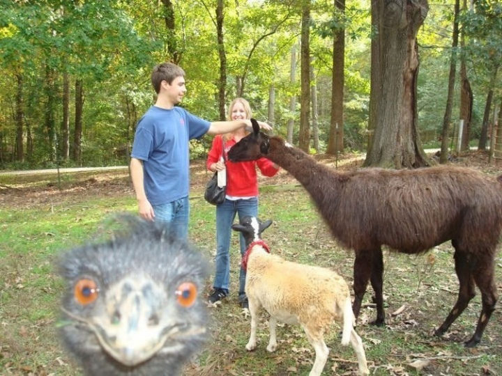 10 animal photobombs - This emu is really eyeing the camera!