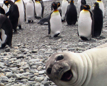 10 Animals That Turned a Regular Photo Into Something Hilarious. LOL!
