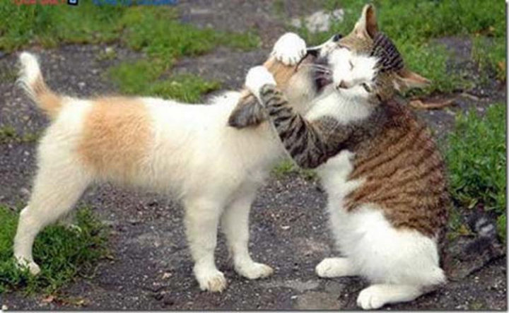10 Photos of Cats Hugging - Romeo and Juliet.
