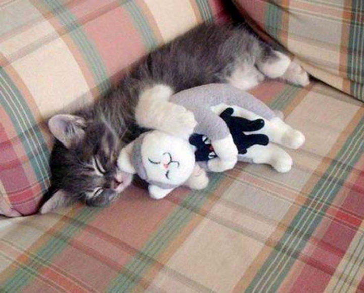 10 Photos of Cats Hugging - Sweet kitten resting with her favorite toy.