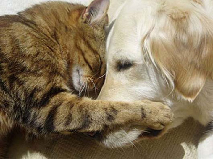 10 Photos of Cats Hugging - Best friends forever.