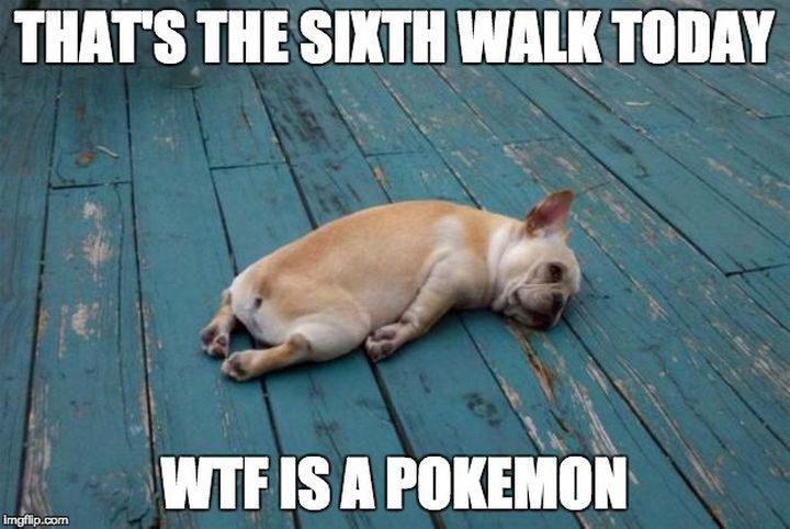 """That's the sixth walk today. WTF is a Pokémon."""