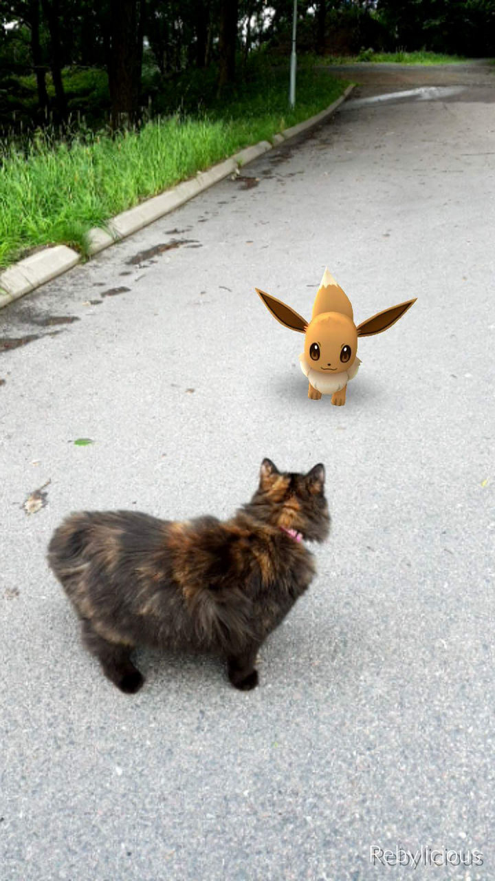 When your pets begin seeing Pokémon (and Pokémon Go memes).