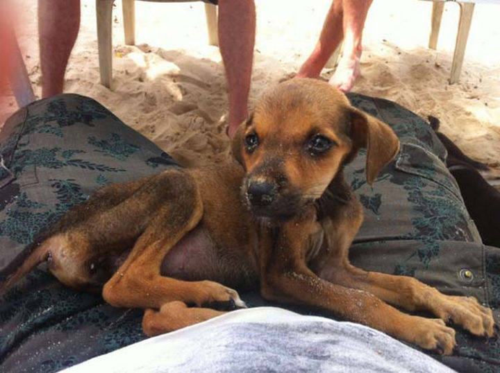 Tourists found a severely dehydrated, starving puppy on a hot beach in Colombia.