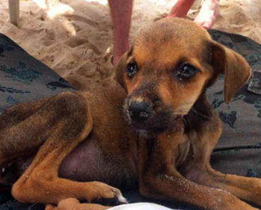 2 Tourists Find a Starving Puppy in Colombia. What They Did Next Warmed My Heart.