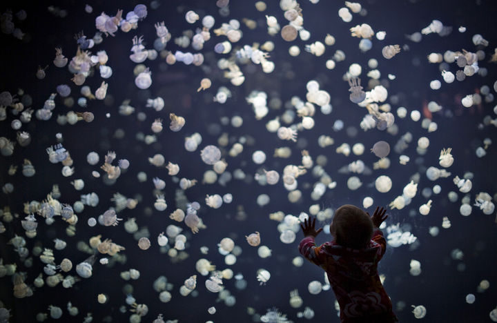22 Timeless Images - A little boy watches in wonder as hundreds of tiny jellyfish swim at the Vancouver aquarium (2013).