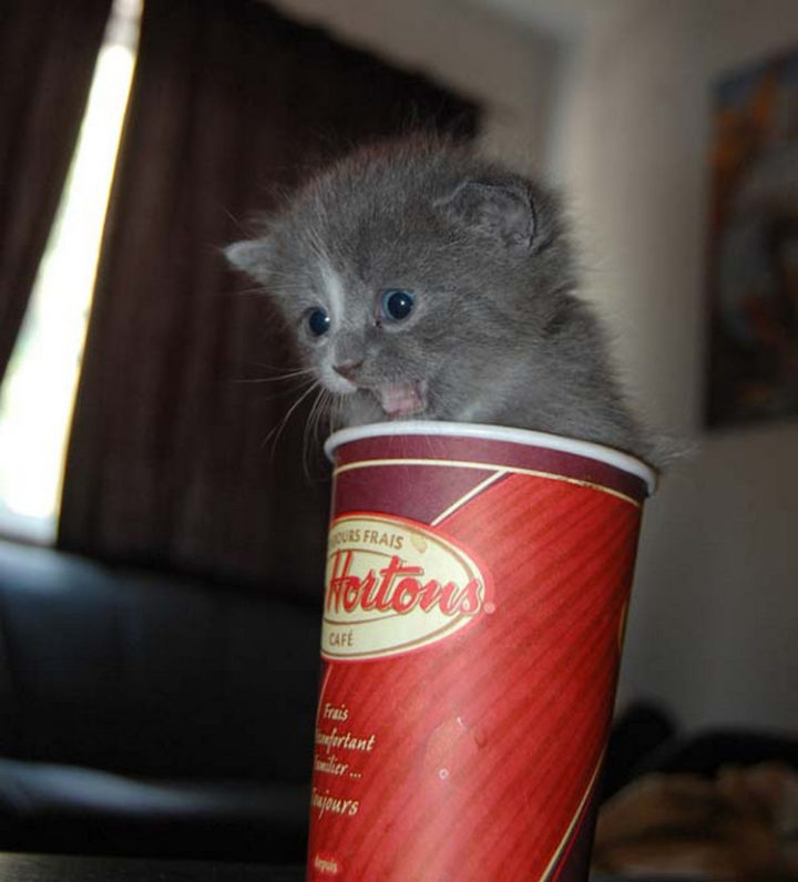 25 Super Cute Fluffballs - How come my coffee cups don't contain this amount of cuteness?