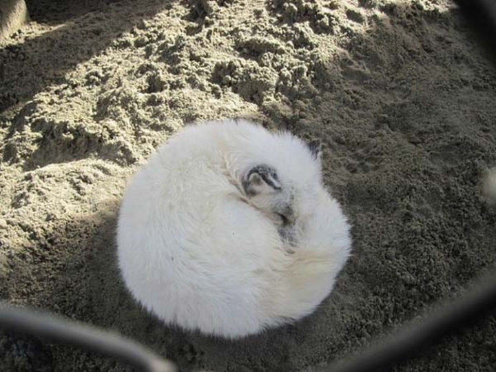 25 Super Cute Fluffballs - Even when they are sleeping!