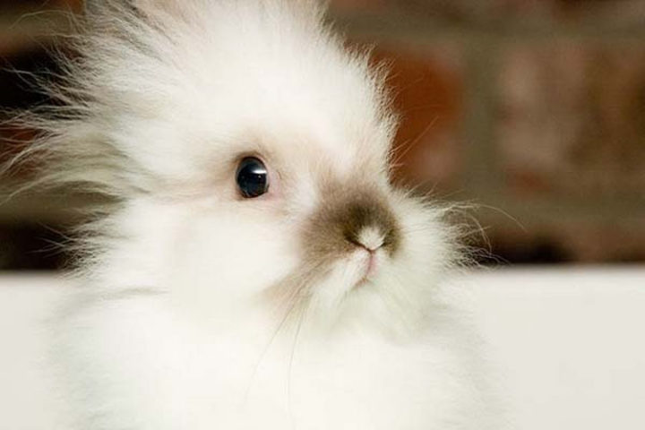 25 Super Cute Fluffballs - This fluffy bunny is ready for cuteness.