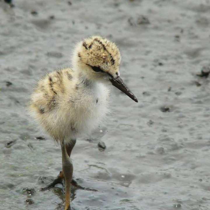 25 Super Cute Fluffballs - This fluffy birdlooking all pretty.