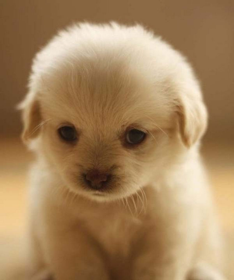 Amazing Fluff Ball Adorable Dog - 25-Super-Cute-Fluffballs-You-Will-Want-to-Hug-Forever-22  Gallery_623848  .jpg
