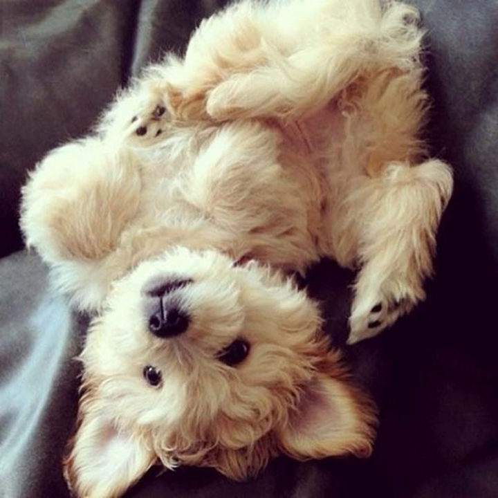 25 Super Cute Fluffballs - He wants to play and I have all day!