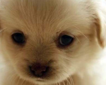 25 Super Cute Fluffballs You Will Want to Hug Forever.