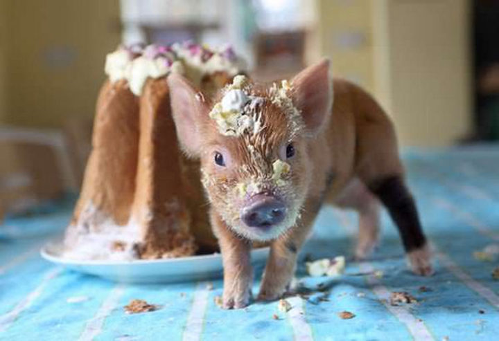 26 Life Lessons We Can Learn From Animals - Have your cake and eat it too. Enjoy every single day.